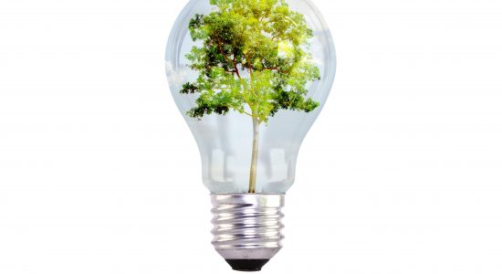 light bulb with tree inside