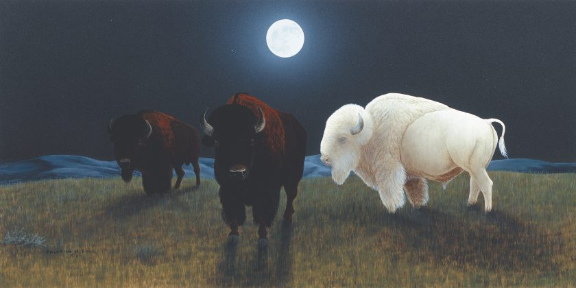 roye-the-white-buffalo